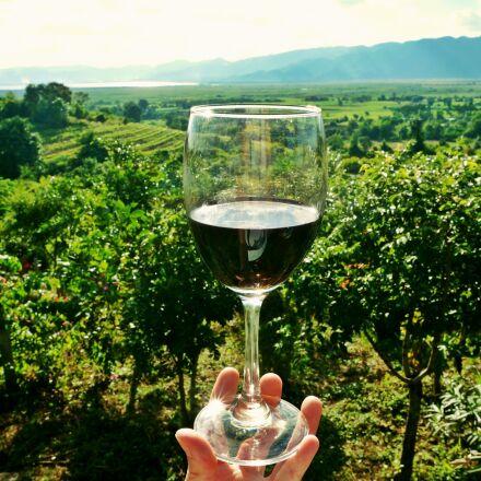 wine, vineyard, drink, Sony NEX-6