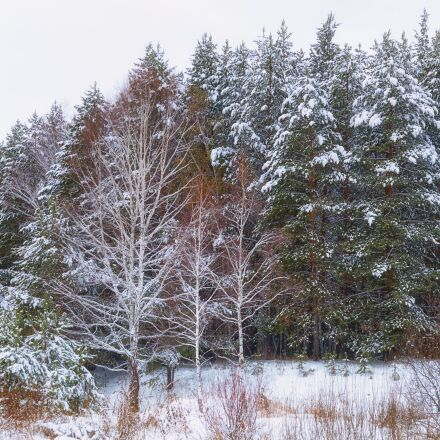 forest, snow, winter forest, Pentax K-500
