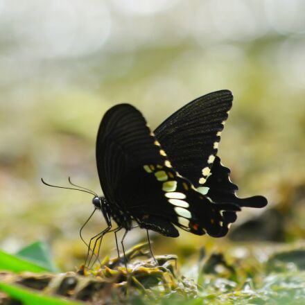 butterfly, insect, nature, Canon EOS 60D