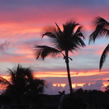 landscape, sunset, palm trees, Canon POWERSHOT ELPH 520 HS