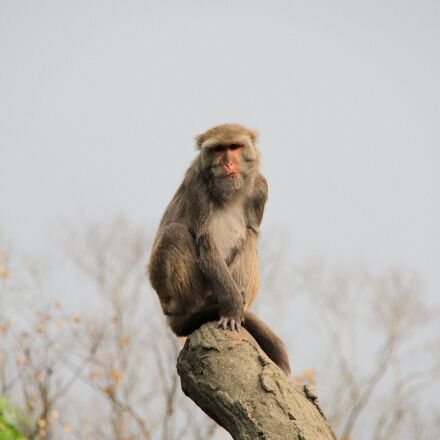 ape, trunk, high, Canon EOS 7D