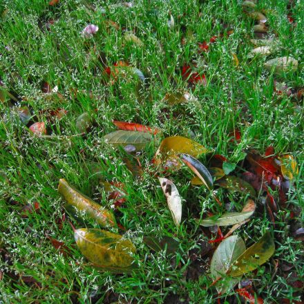 weed, green, fallen leaves, Canon IXY DIGITAL 910 IS