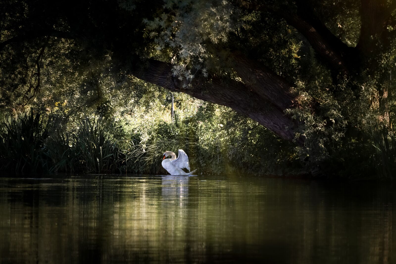 """Canon EOS 7D sample photo. """"Swan, lake, floating"""" photography"""
