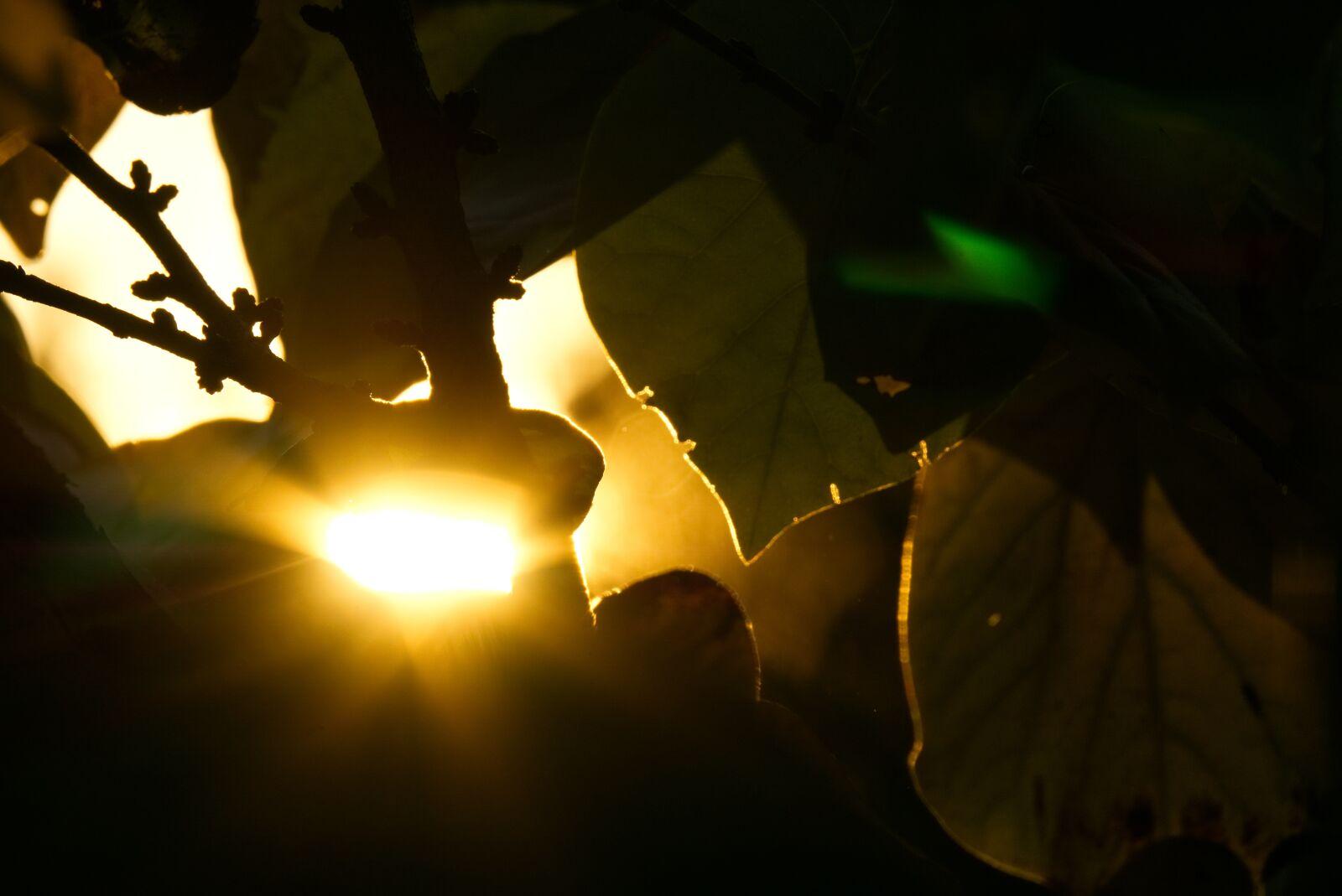 "Sony a6000 sample photo. ""Backlighting, sun, sunset"" photography"