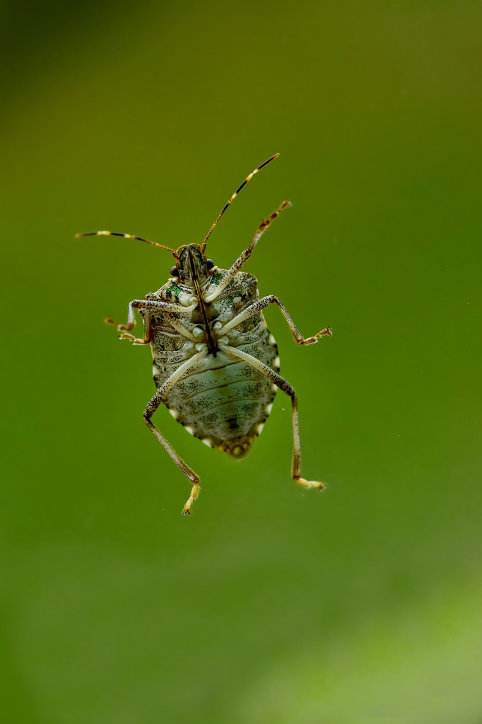 """Sony a6000 sample photo. """"Nature, animal, insect"""" photography"""