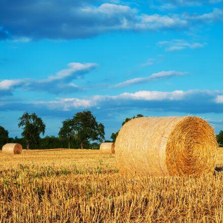 straw, straw bales, bale, Fujifilm X-T2