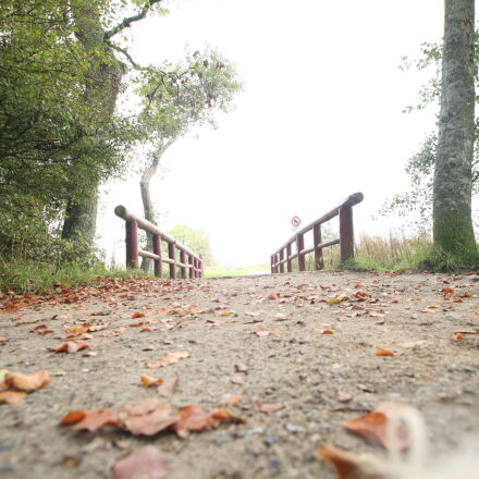autumn, bridge, daylight, fall, Canon EOS 5D