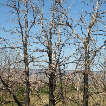 trees, nature, three, Fujifilm FinePix F460
