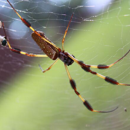 spider, web, spider web, Canon EOS REBEL T3I