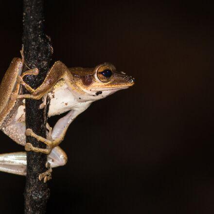 pat, amphibian, night animals, Canon EOS 70D