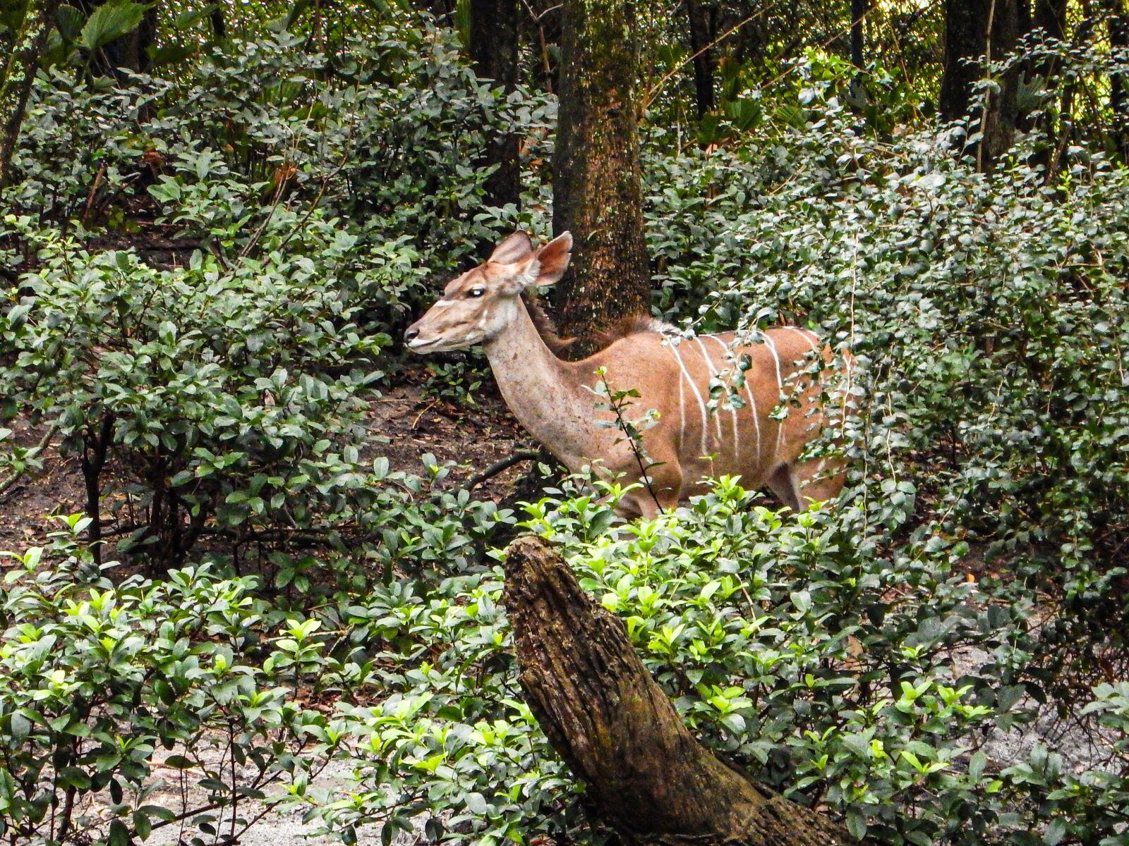 "Nikon Coolpix AW120 sample photo. ""Deer, gazelle, hervivoro"" photography"
