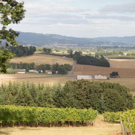 field, landscape, mcminnville, wine, Canon EOS 6D