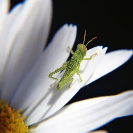 nature, flower, insect, macro, Nikon D3300