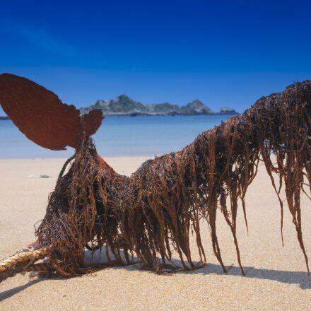 the sea, anchor, beach, Canon EOS 5D MARK IV