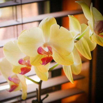 orchids, green, best, Pentax K100D