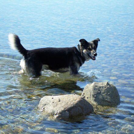 dog in water, sea, Sony DSC-W17