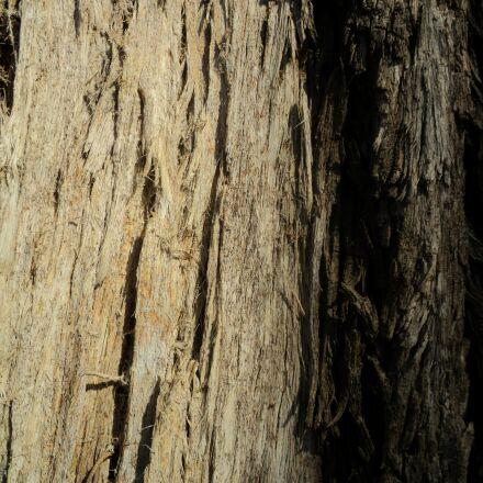 tree, tree trunk, bark, Sony DSC-S2000