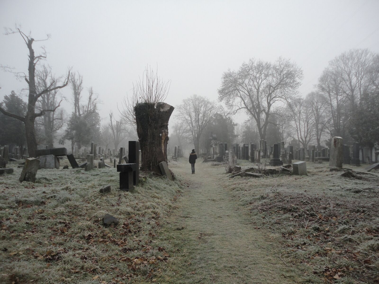 """Sony DSC-W350 sample photo. """"Cemetery, haunted woods, autumn"""" photography"""