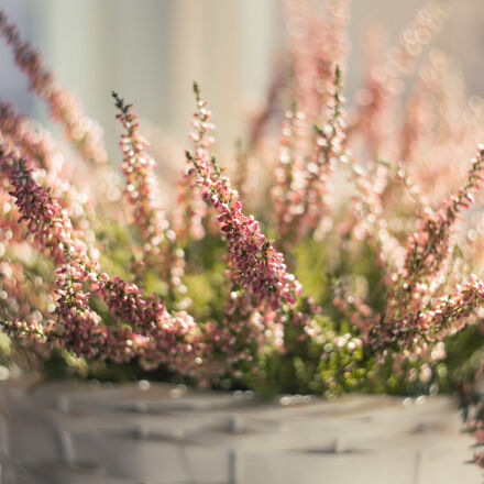 basket, beautiful, blooming, blur, Canon EOS 6D