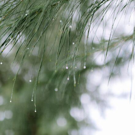 bokeh, dof, leaves, nature, Nikon D7000