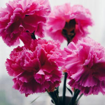 flower, still life, ppt, Fujifilm X-T10