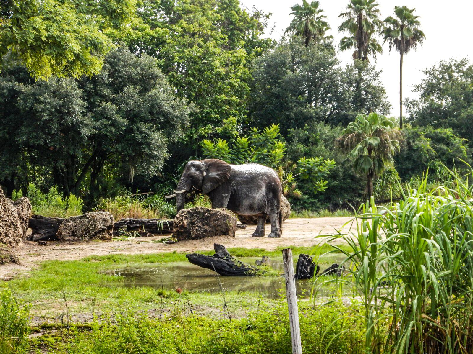 "Nikon Coolpix AW120 sample photo. ""Elephant, bebe, africa"" photography"