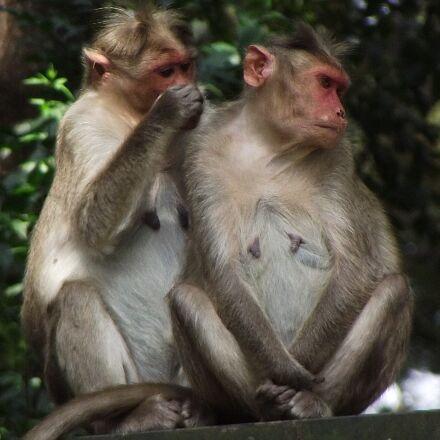 help, monkey, animals, Fujifilm FinePix S1800