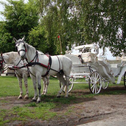 horses, animals, chaise, Sony DSC-W210