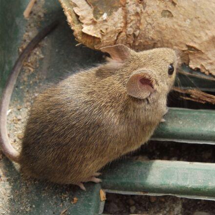 mouse, rodent, malicious, Fujifilm FinePix S4080