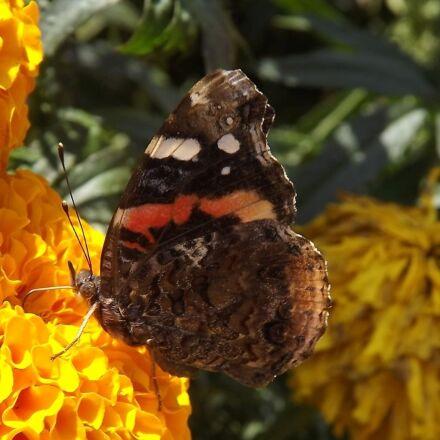 fauna, butterfly, wings, Fujifilm FinePix S3400