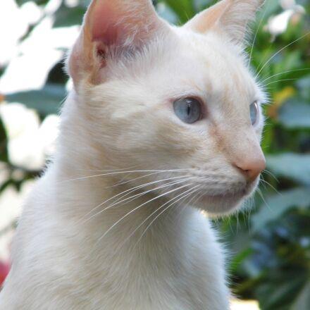 cat, pet's, feline, Panasonic DMC-LZ20