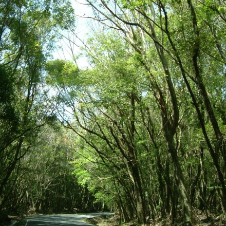 landscape, woods, forest, Fujifilm FinePix F410
