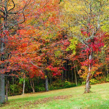 fall, autumn, leaves, Fujifilm FinePix E550