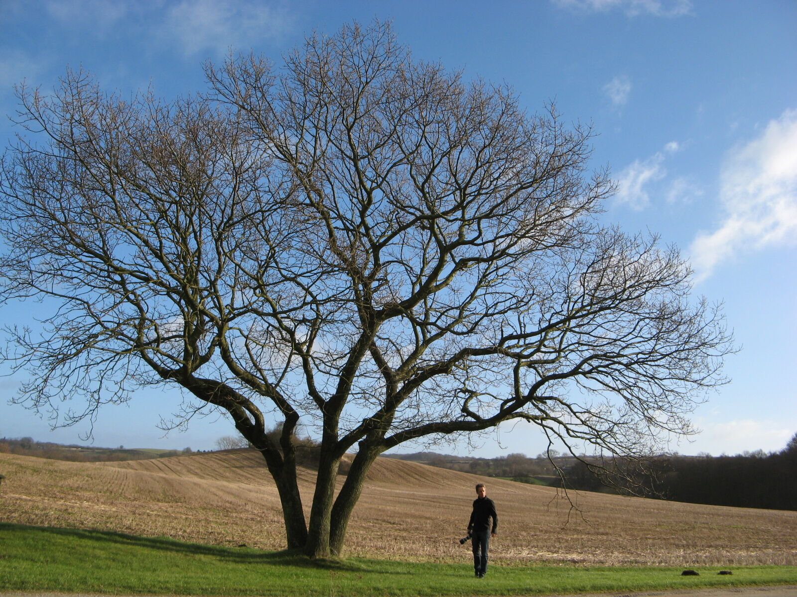 alone, countryside, daylight, environment