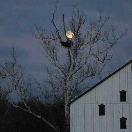 eagles, nest, night, barn, Nikon D300S