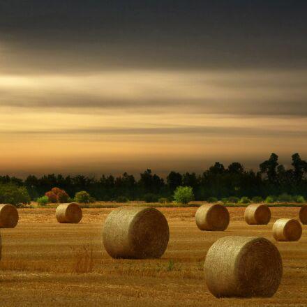 hay bales, harvest, summer, Panasonic DMC-ZS7