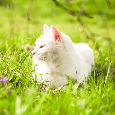 young cat, meadow, chill, Canon EOS 5D MARK II