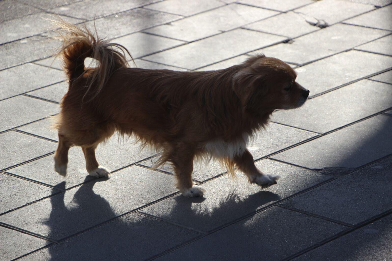 "Canon EOS 600D (Rebel EOS T3i / EOS Kiss X5) sample photo. ""Animal, pet, dog"" photography"