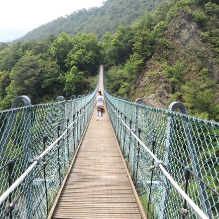 suspension bridge, tree, bridge, Canon EOS M50