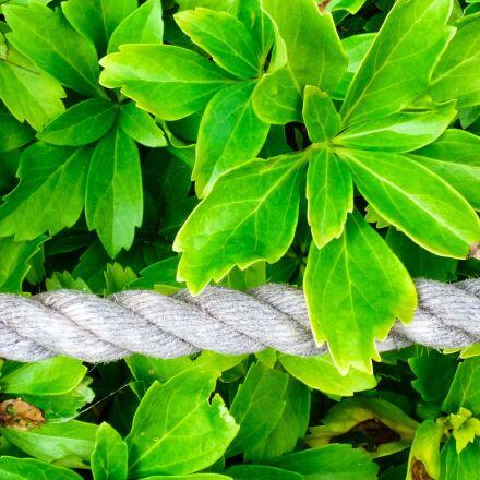 leaf, plant, nature, Panasonic DMC-FS16