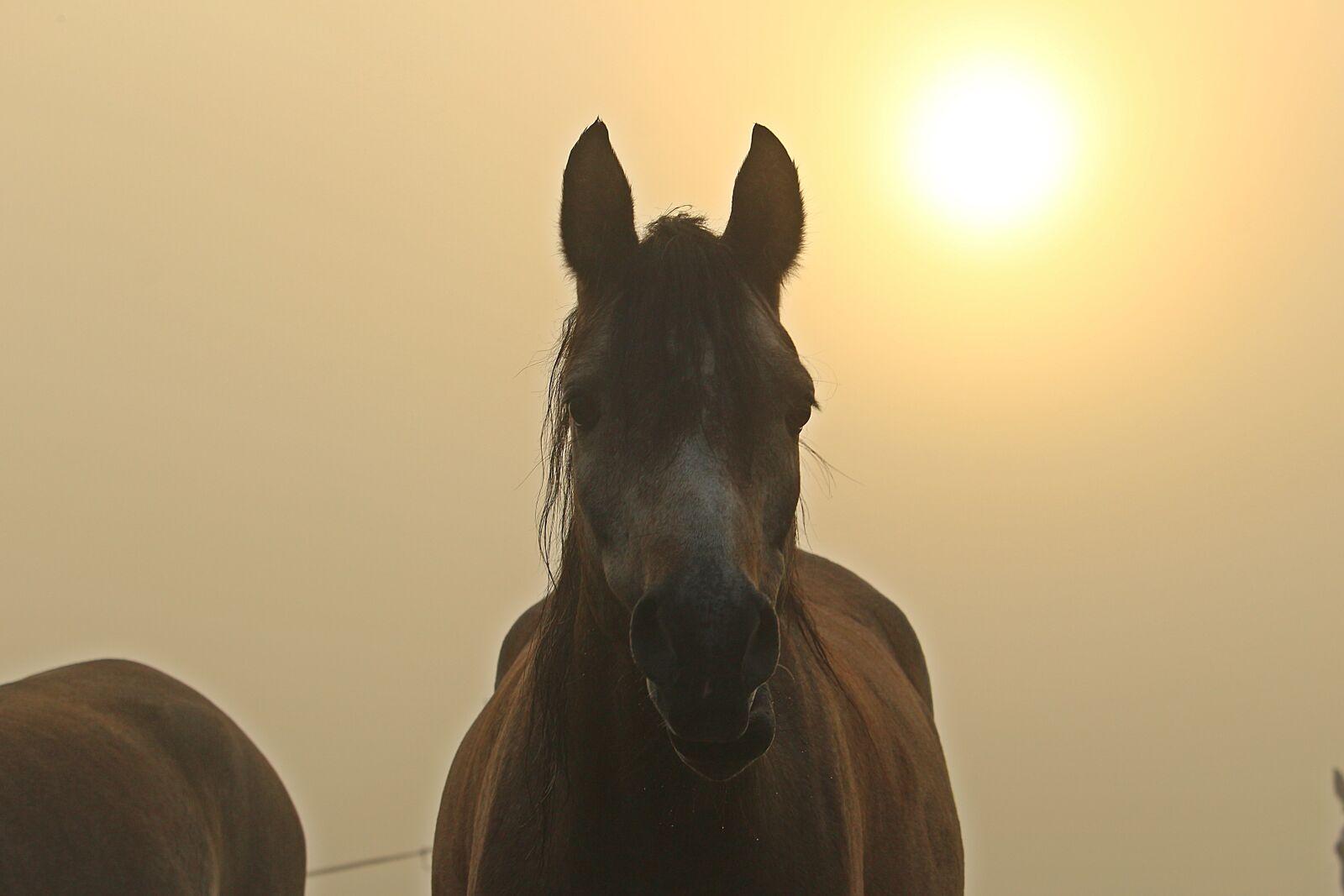 """Canon EOS 100D (EOS Rebel SL1 / EOS Kiss X7) sample photo. """"Fog, horse, sun"""" photography"""