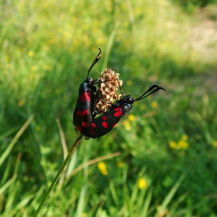 nature, grass, summer, Sony DSC-T70