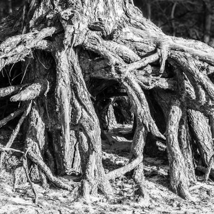 root, tree, root system, Samsung NX300M