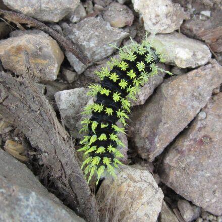 caterpillar, green, green caterpillar, Canon POWERSHOT ELPH 100 HS