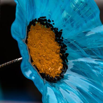flower, glass flower, garden, Canon EOS 70D