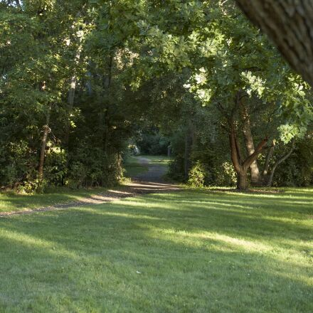 dirt, morning, path, trees, Nikon D70S