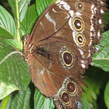 butterfly, animal, insect, Canon DIGITAL IXUS 500