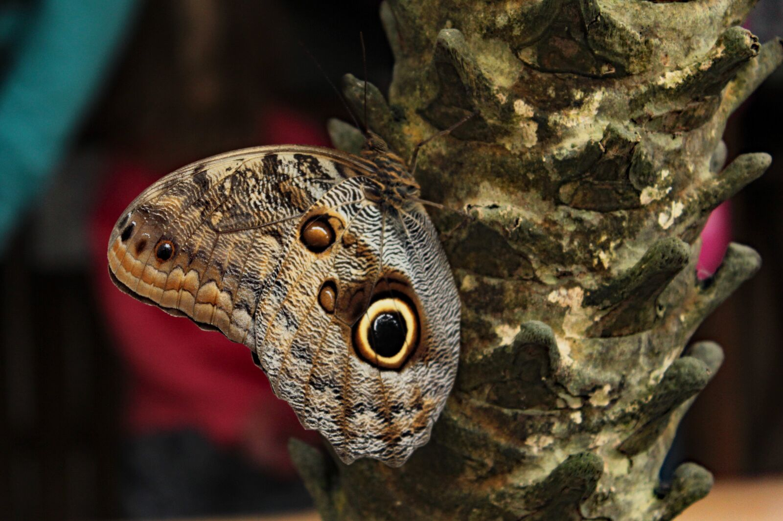 """Canon EOS 600D (Rebel EOS T3i / EOS Kiss X5) sample photo. """"Nature, butterfly, insect"""" photography"""