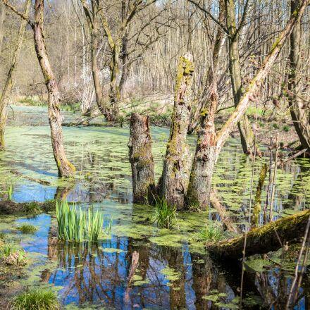 swamp, marsh, wetland, Samsung NX300M