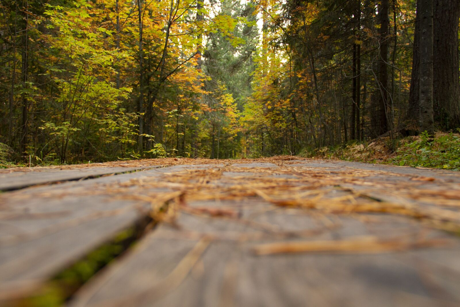"""Canon EOS 70D sample photo. """"Forest, trail, boards"""" photography"""